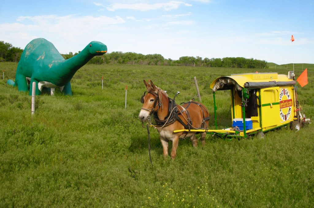 Mule Polly and the Creston dinosaur.