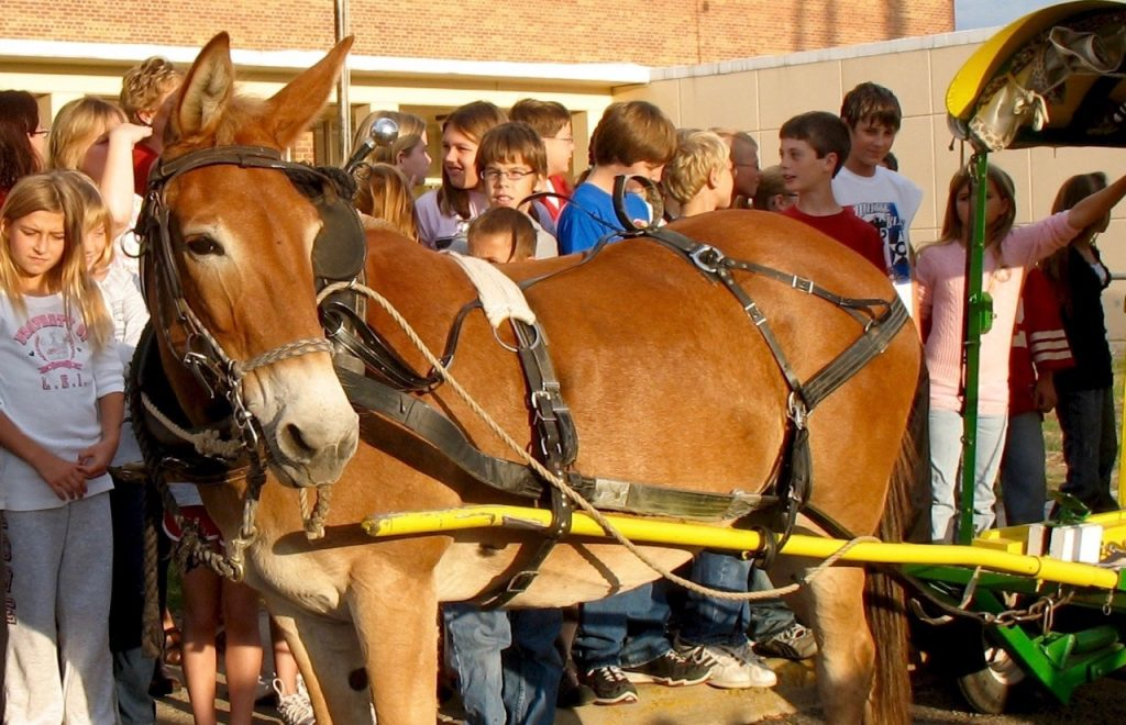 Mule Polly visits a school in Kansas.