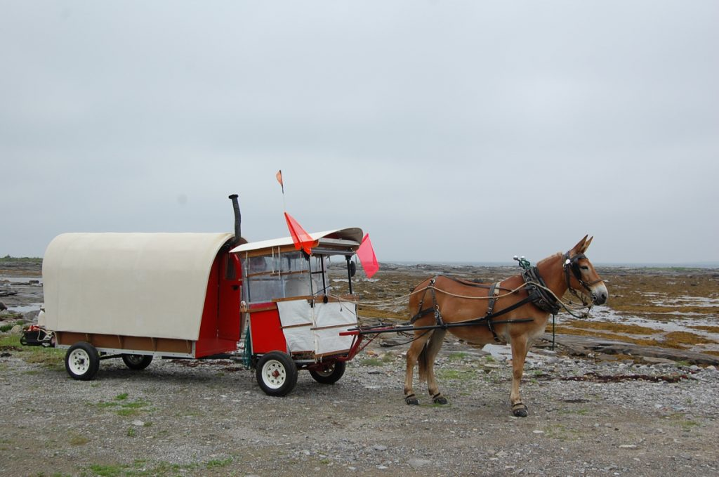 Polly's wagon for Newfoundland.