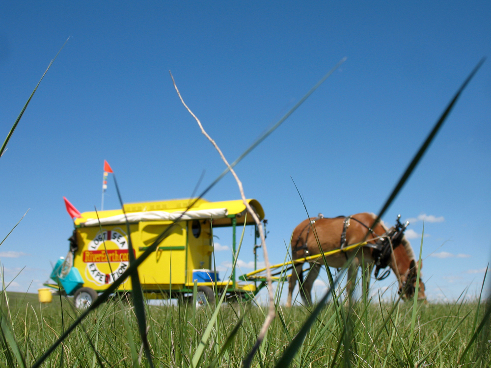 The Prairie-eye-view of Polly taking a snack break on her voyage across America.