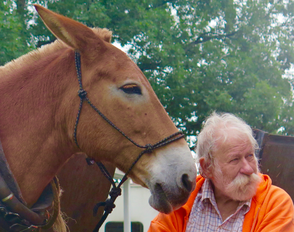 Mule Polly and Ronald Hudson at Benson Mule Days 2016.