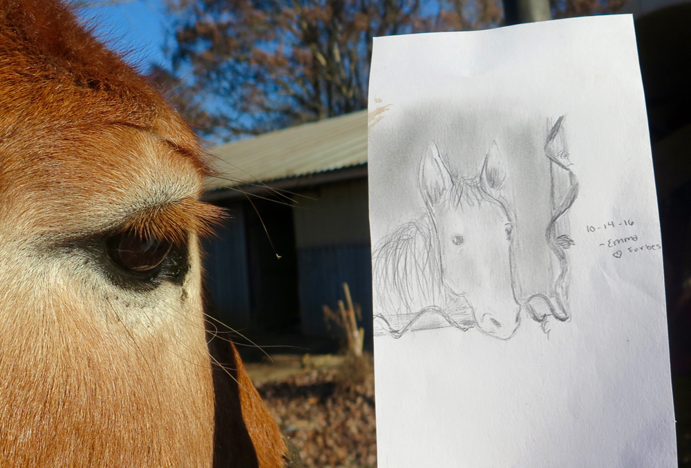 Mule Polly eyes her likeness.
