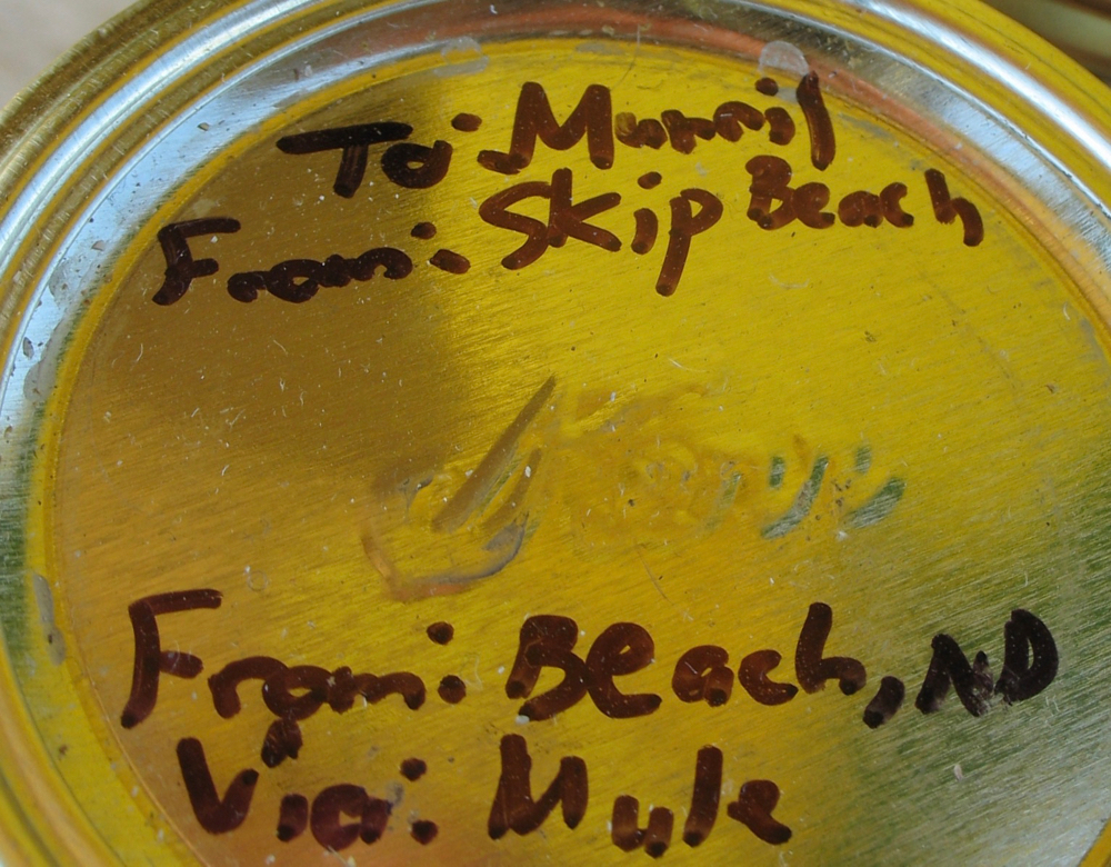 "Written on each lid was ""To Murril From Skip Beach"". The honey was to be delivered ""Via: Mule""."