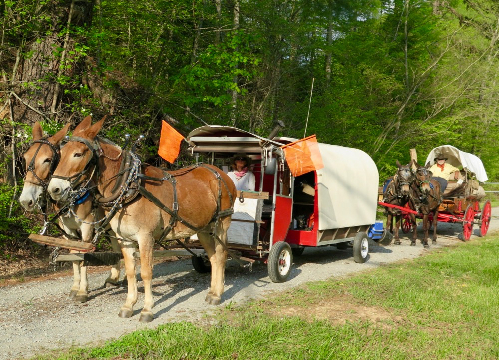 Bernie Harberts leaves his farm with a mule wagon.