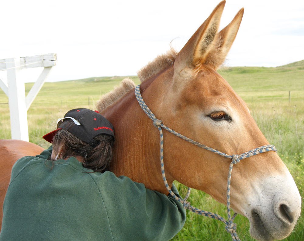 Lakota elder Janice Red Willow spends some quiet time with mule Polly.